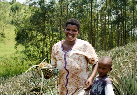 Image of smiling Ugandan woman harvesting pineapples with her young son