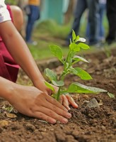 Image of young woman planting tree