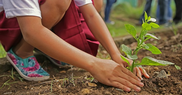 Image of young girl planting a tree